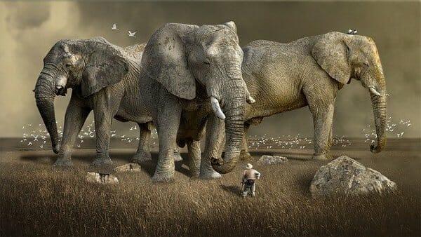 3 éléphants en 300dpi et 40,8ko.