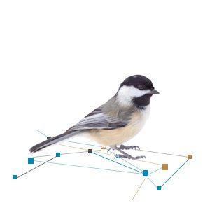 Mésange sur un nid numérique.