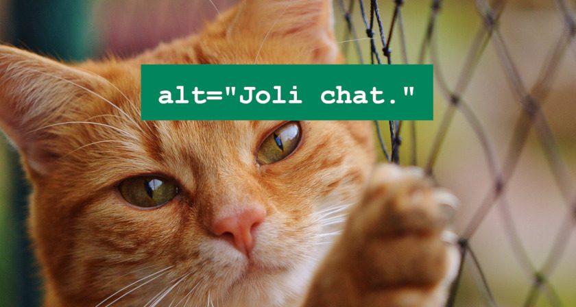 """Chat avec texte : alt=""""Joli chat."""""""